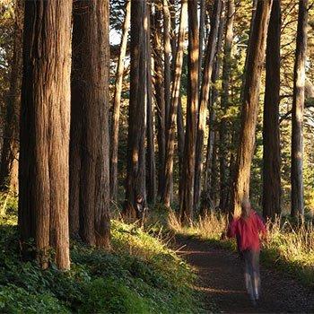 Ecology Trail to the Bay Area Ridge Trail photo