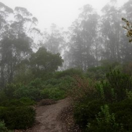 Mount Sutro Forest photo